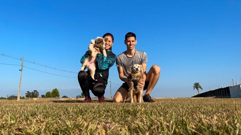 vantagens e desvantagens em ter dois cães
