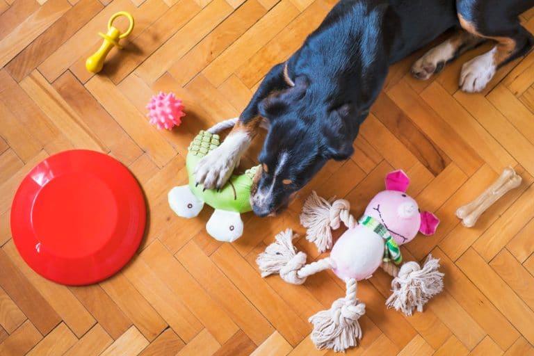 Cachorro brincar sozinho