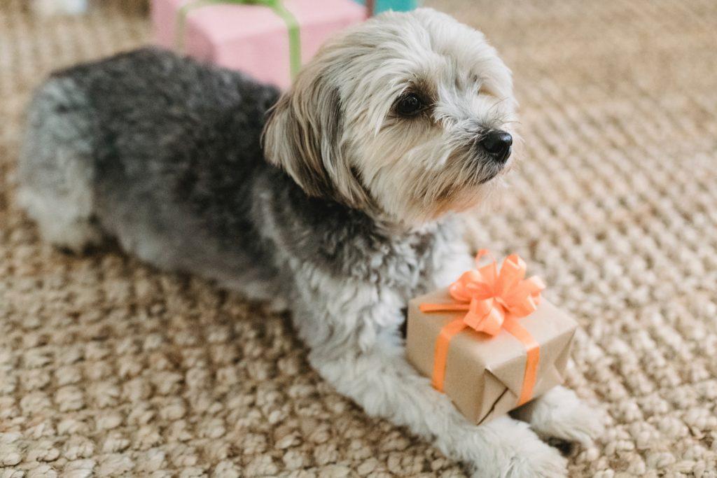 Cachorro brincar sozinho surpresa