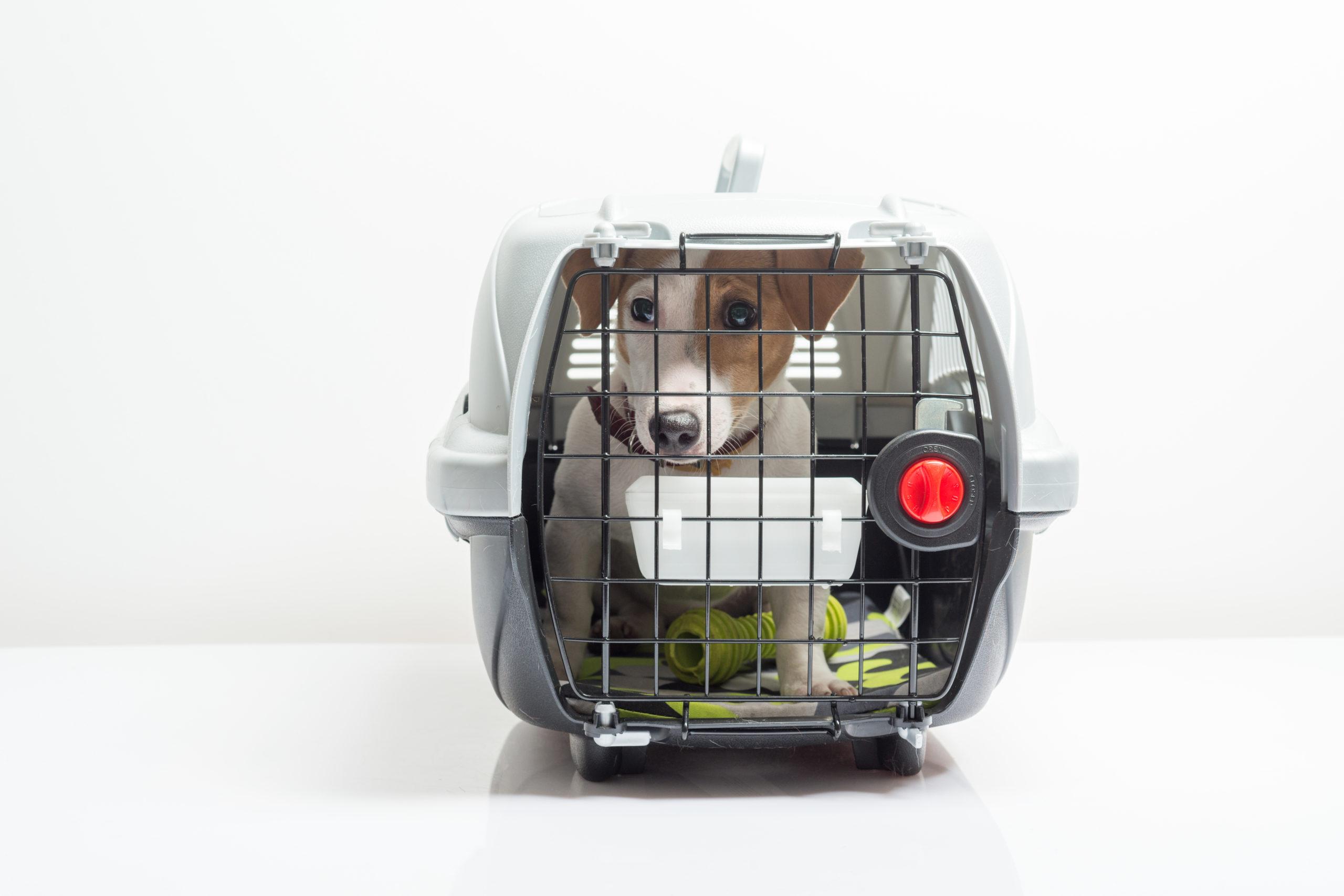 Viajar avião cachorro